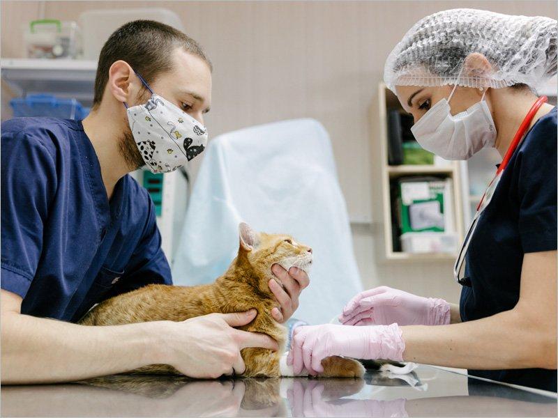 В Брянске в ближайшее время ждут антикоронавирусную вакцину для животных