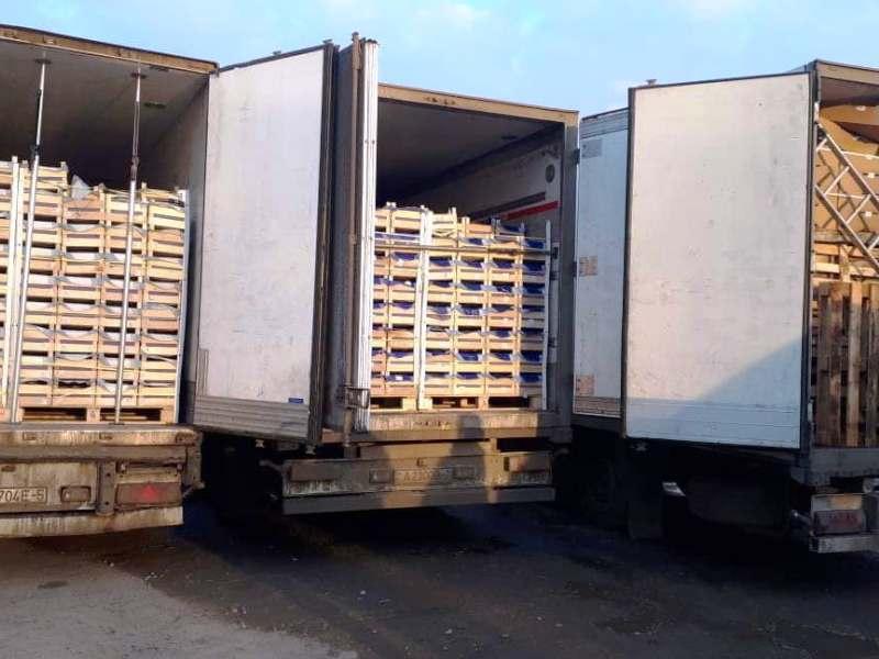 Пограничники остановили в Брянской области целый конвой с контрабандными фруктами из Белоруссии