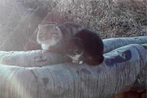 На брянских «голых» теплотрассах могут одновременно греться 6000 котиков