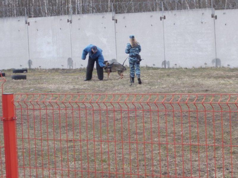 Трудных подростков из Брянска познакомили со служебными собаками