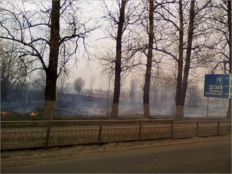 Количество «травяных» пожаров в Брянской области превысило 750 случаев