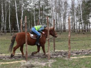 В Нетьинке прошли первые в Брянске соревнования по конному туризму