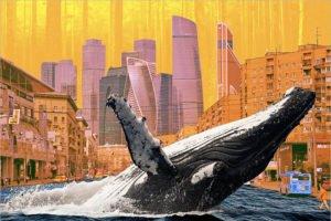 Сколько стоят для человека услуги китов, африканских слонов и российских лесов?