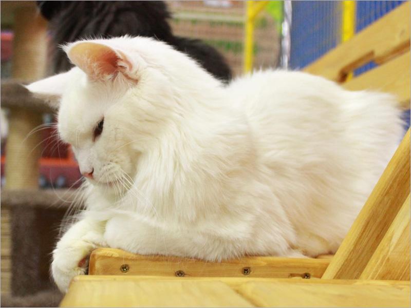 Брянская «Родина» стала территорией «Федерации кошек»