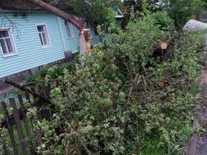 В Брянске дерево рухнуло на компанию подростков
