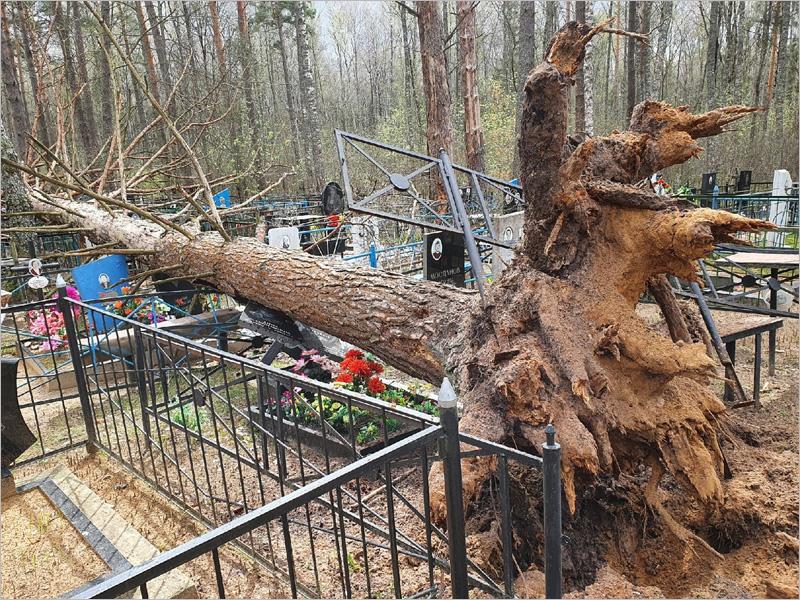 Обещанный синоптиками ветер валит в Брянске деревья и светофоры