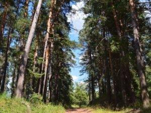 В Брянской области снят запрет на посещение промокших лесов