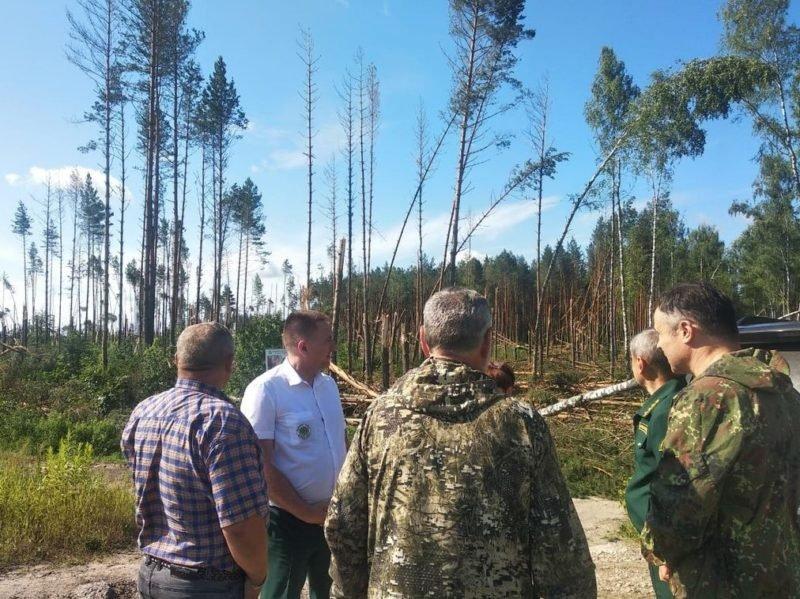 Ураганный ветер «положил» брянские леса под Сельцо
