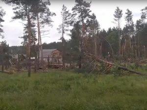 Появилось видео ураганного «лесоповала» под Сельцо Брянской области