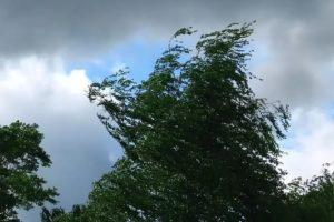 Жителей Брянской области предупредили о шквалистом ветре 3 июня