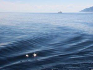 Четверо привитых иностранной вакциной спортсменов заразились COVID-19 во время трансбайкальского заплыва