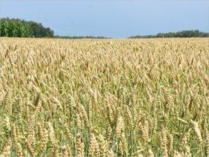 Народная программа «Единой России»: льготное кредитование, решение проблемы сбыта продукции фермеров, рост зарплат на селе