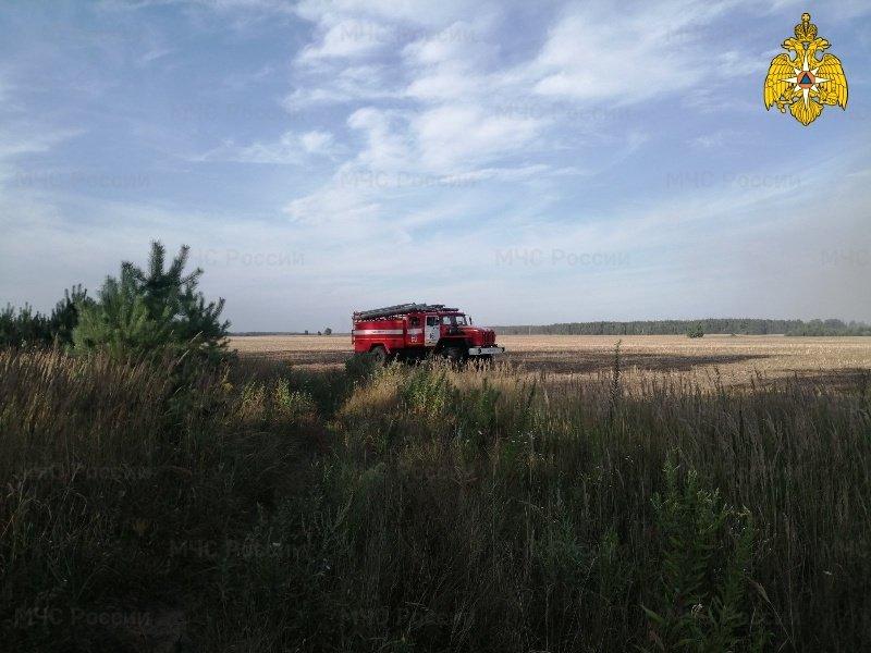 В клинцовском лесу потушен пожар. Деревня Веприн не пострадала