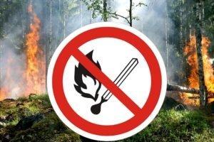 В брянских лесах с 8 июля по 5 сентября вводится особый пожароопасный режим