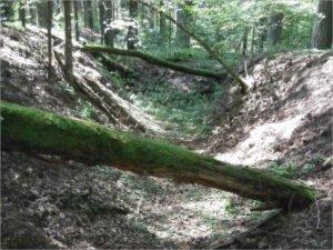 Поисковики «Дружбы» добрались в брянских лесах до стоянки партизанского отряда имени Лазо