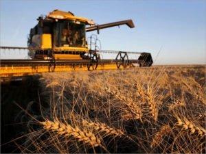 В Брянской области обмолочено три четверти площадей под зерновыми