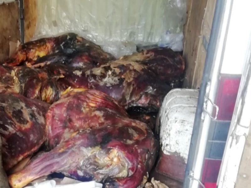 В Брянской области отправили на ветсанутильзавод 220 кг сомнительной говядины