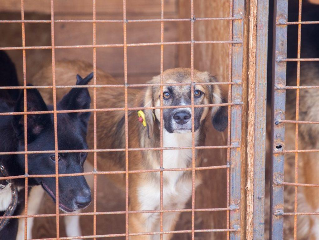 Временный приют для собак в Брянске может стать постоянным