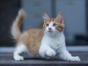 Брянский приют для кошек «Второй шанс» отметит семилетие. Выставкой питомцев и концертом с «Лисом и Лапландией»