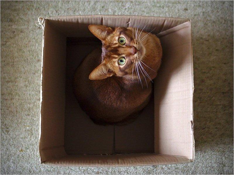 Как обеспечить заботу о кошке на время отпуска?