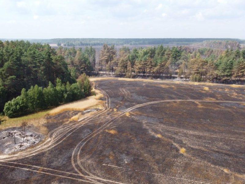 В брянском управлении лесами уточнили ущерб от субботнего сельхозпала