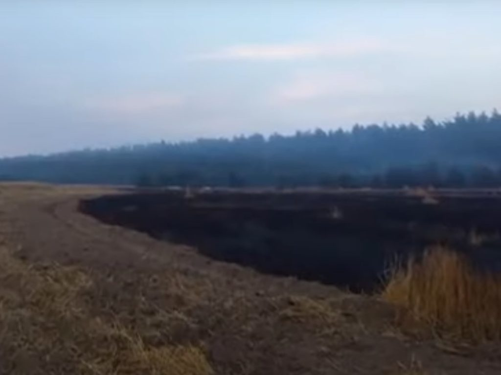 В Брянской области из-за сельхозпала выгорело около 60 га ржи