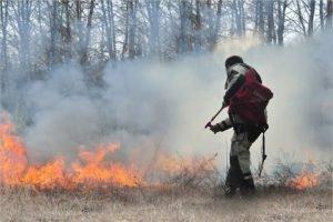 С начала лета в Брянской области произошло 150 лесных и полевых пожаров