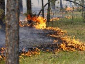 В Брянской области выгорело поле с зерновыми и около гектара леса. Поджигателю грозит штраф в 0,5 млн. рублей