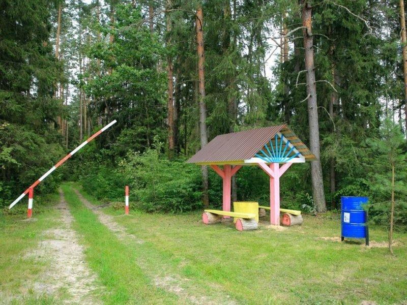 В Брянской области отменили ограничения на посещение лесов. На декаду раньше срока