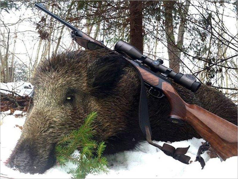 В Карачеве отправлен под суд браконьер, охотившийся в заказнике на кабанов