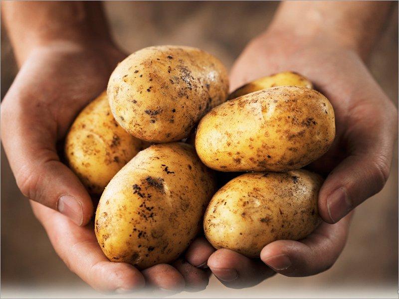Покупательная способность зарплат жителей Брянской области сократилась на полтонны картошки