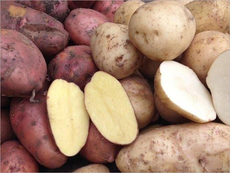 Вкусная картошка: как выбирать, на что обратить внимание, сколько в ней пестицидов и нитратов