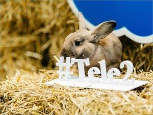 Tele2 приглашает в необычное путешествие по Брянской области