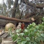 Шквал оставил без света больше 20 населённых пунктов в Брянской области