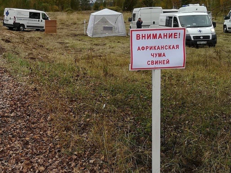 В Брасовском районе потренировались в ликвидации очага африканской чумы свиней. Условных