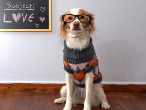 Новый учебный год для собак: куда пойти учиться псу?