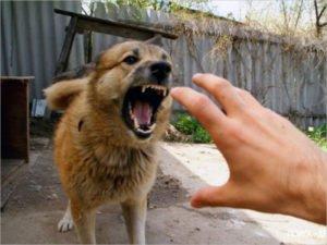 Сильное нервное потрясение от укуса собаки жительница Брянска оценила в 30 тысяч рублей