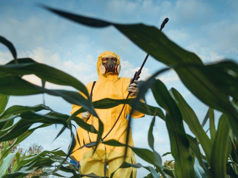 Прогресс или вред: опасны ли ГМО и почему их боятся?