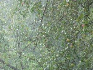 Самый мокрый уик-энд в Брянске: за четыре дня выпало почти полторы месячных нормы осадков