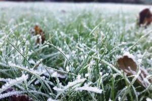 В Брянске 6 сентября прогнозируются заморозки до 2 градусов мороза