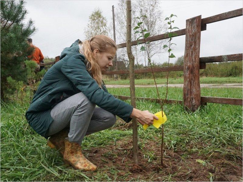 Для редкой бабочки в «Брянском лесу» высажены плодовые деревья