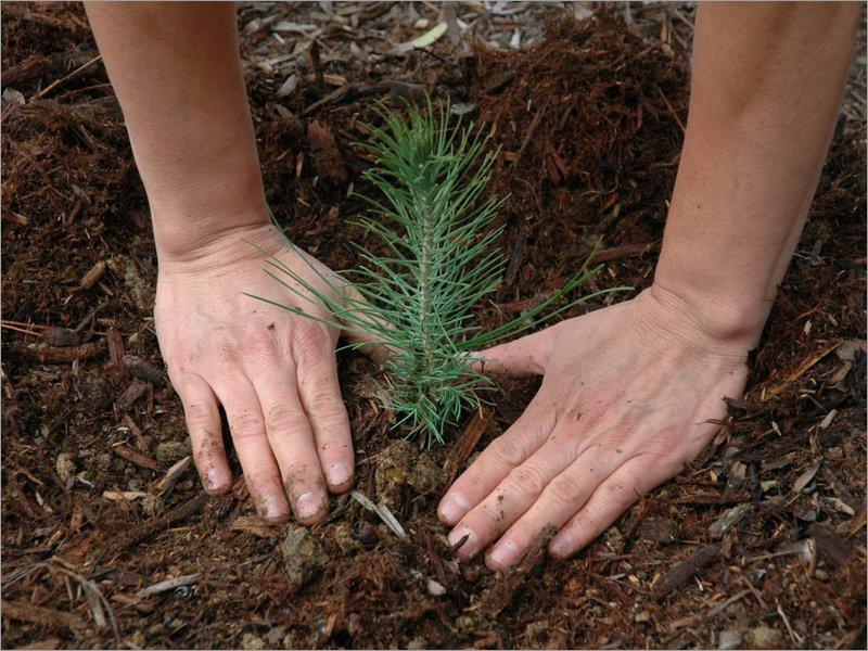 Рубить нельзя сажать: как мы теряем леса