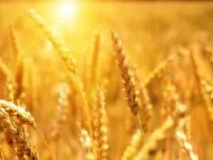 Брянские собственники земельных участков получат ещё один инструмент для реализации сельхозпродукции  — Валуев