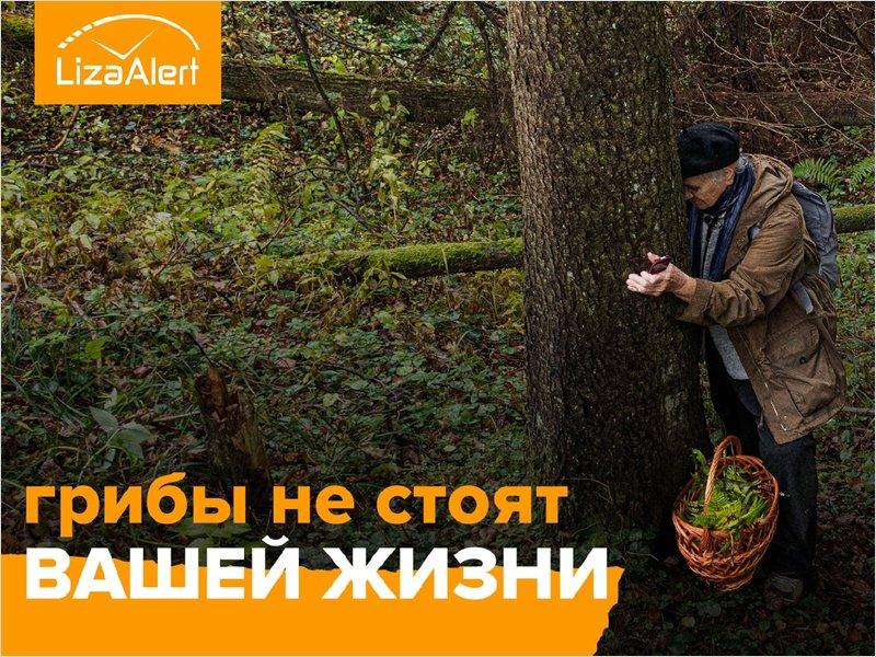 Трое пропавших в сентябре брянских грибников до сих пор не найдены
