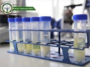 В Брянске за федеральные деньги будет создана испытательная лаборатория Россельхознадзора