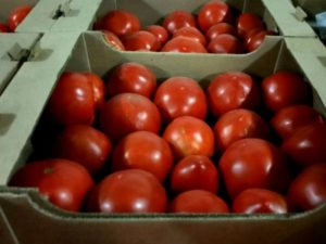 В Брянской области раздавили 7,5 тонн сомнительных томатов и перцев