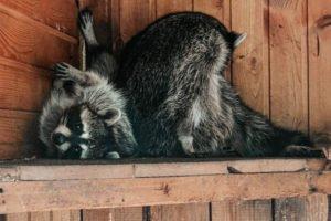 Брянский зоопарк в парке «Соловьи» получил лицензию от Россельхознадзора
